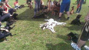 Hundeschule Saalfeld Welpenkurs