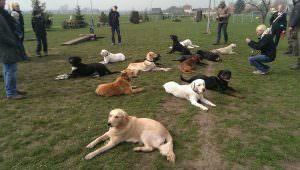 Alltagstaugliche Hundeerziehung