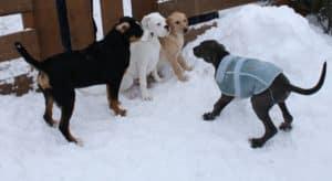 Junghundespielstunde