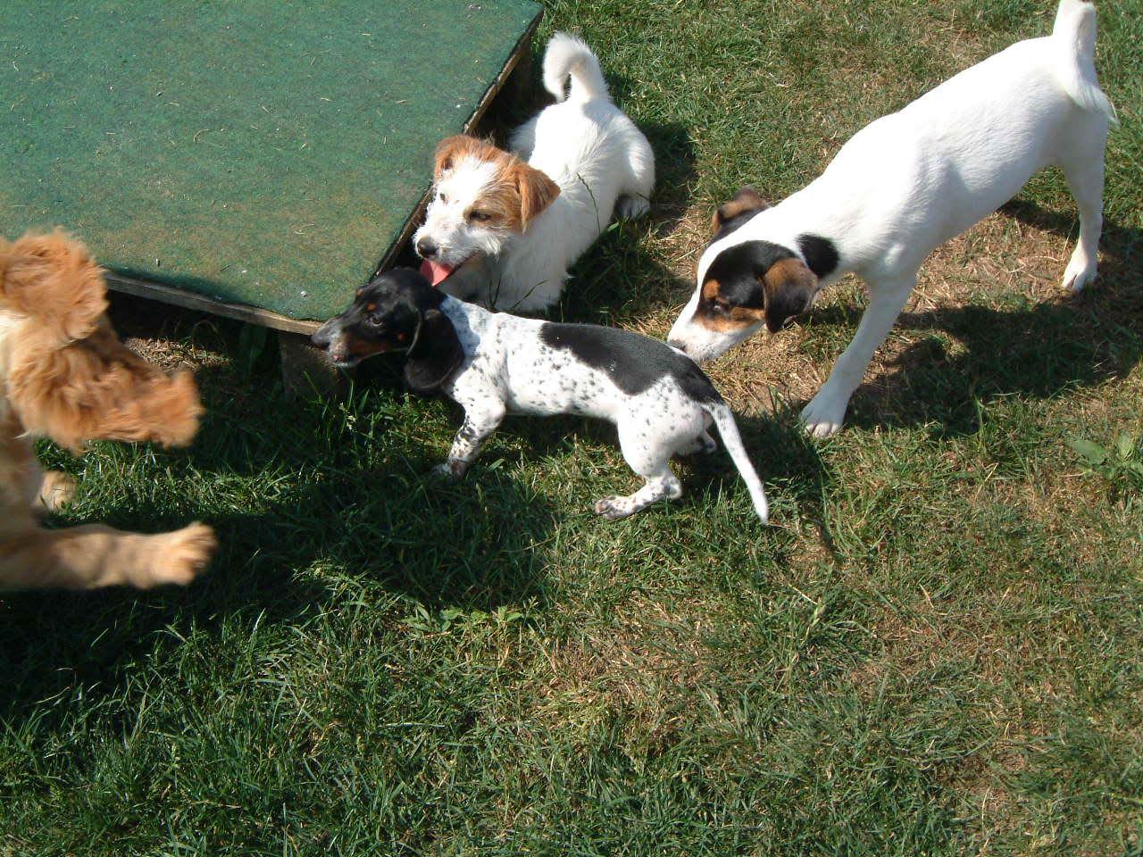 Spielgruppe für kleine Hunde