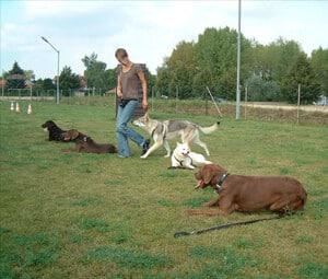 Grunderziehung für Hunde