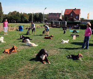 Gruppenkurse für Hunde