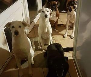Hundetraining zu Hause