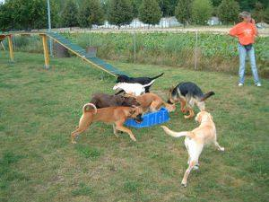 Junghundespielgruppe