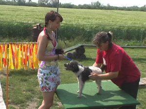 Tierarzt Training