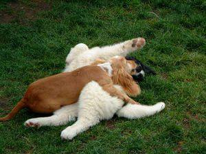 Soziale Kontakte der Hunde untereinander