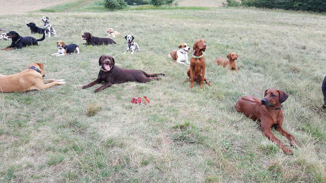Hunde Erziehen und Ausbilden