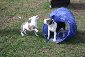 Welpenspielstunden – Hundeschule Saalfeld