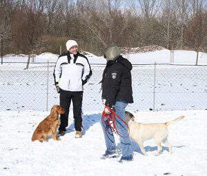 Kurs für junge Hunde