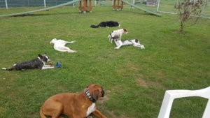 Hundetagesbetreuung