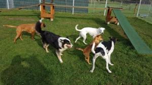 Spielzeit in der Hundepension