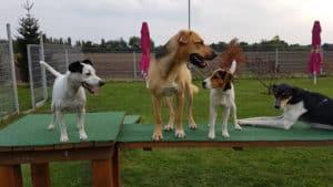 Soziale Kontakte der Hunde