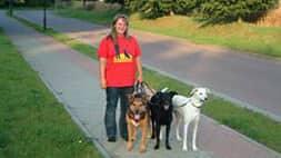 Hundetraining in gewohnter Umgebung