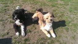 Gruppe für kleine Hunde