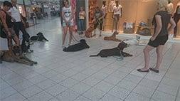 Hundetraining im Einkaufszentrum