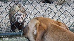 Hundetraining im Zoo