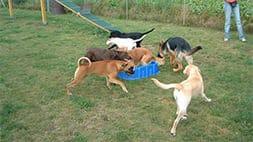 Spielgruppe für Junghunde